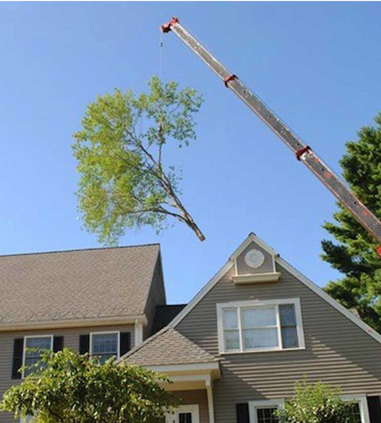 tree removal services in minnesota